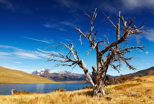 Fds largo 09 Oct o 04 Dec en Patagonia vía LAN
