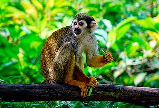 45% Visita a Museo Centro de Primates  + Alimento para Monos