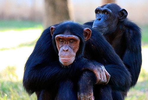 Visita a Museo Centro de Primates  + Alimento para Monos