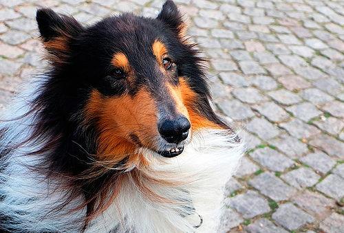 Corte de pelo y uñas, revision veterinaria y regalo en Arf