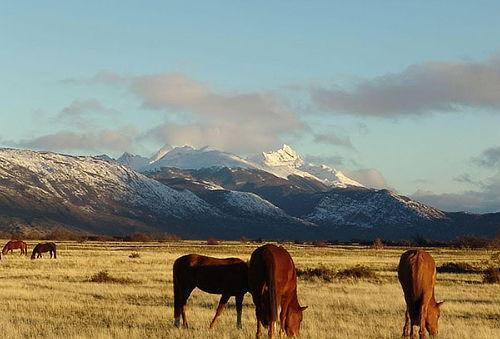 Disfruta La Magia Hotel NOI Indigo Patagonia Puerto Natales.