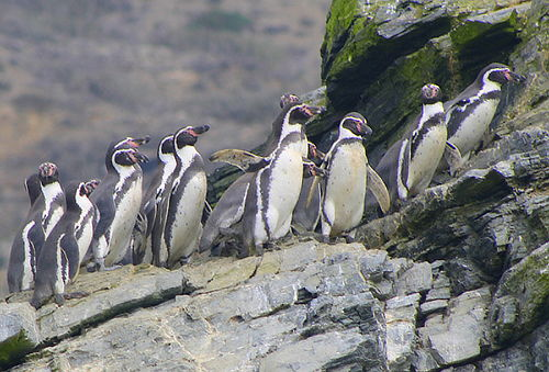 Full Day en Isla Damas y Pingüinera de Humbold, La Serena