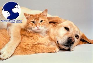 Spa Perros y Gatos + Desparasitacion Hasta 50%