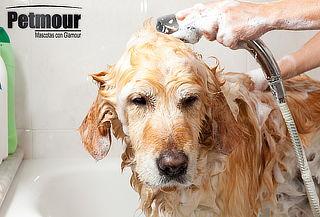 Día de Spa para Perro o Gato + Consulta veterinaria