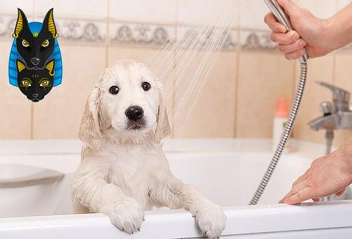 Spa para Perros en Belén