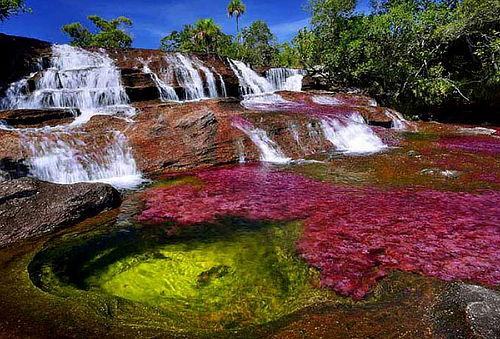 Caño Cristales el Río Más Hermoso del Mundo