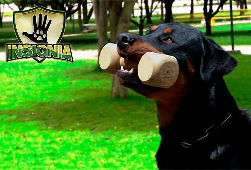 Clase de Adiestramiento Canino en Suba