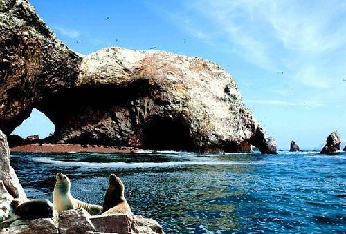 Full Day Paracas - Ica + Areneros o Islas Ballestas y Más
