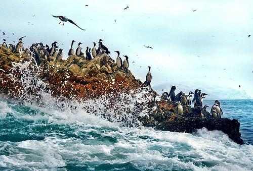 ¡Escápate a Paracas! Islas Ballestas + Reserva Nacional