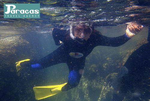 Buceo + Equipo + Traje + Fotos Subacuáticas y Más Paracas