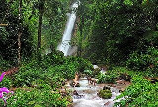 ¡FERIADO APEC! Selva Central 4D/3N + Alojamiento y Más