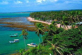 Praia do Forte (Brasil) Aéreos,hotel, traslados y más!