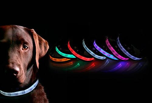 Collar Led para Perro