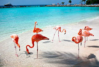 ¡Aruba Increíble! Pasajes Aéreo + Hotel Todo Incluido y Más!