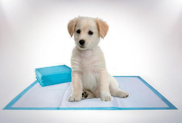 100 o 200 Toallas de Entrenamiento para Perros
