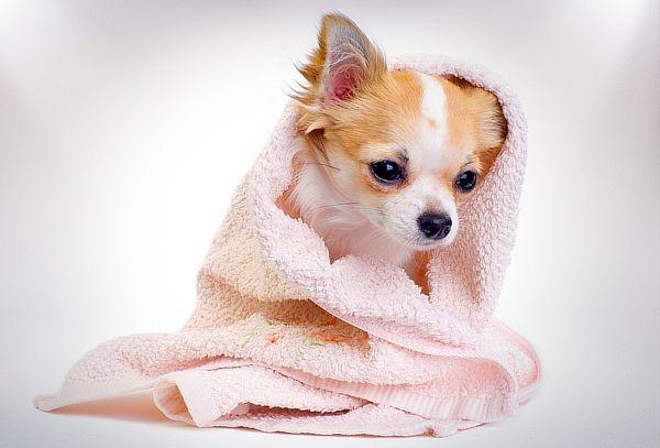Spa Canino + Limpieza Dental en Veterinaria Arf!