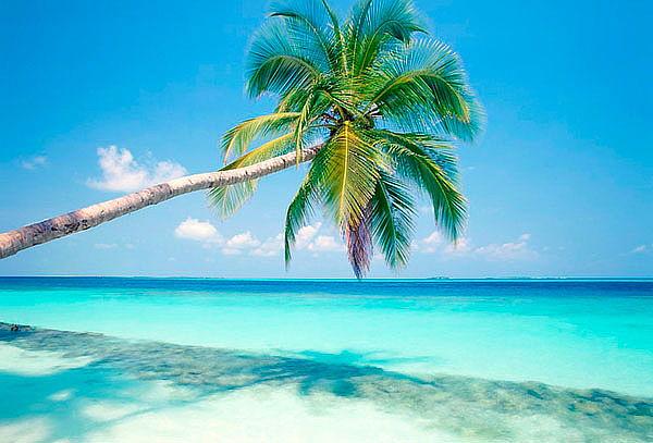 Disfruta Punta Cana, TODO INCLUIDO, 7 Noches, Aéreo Vía COPA