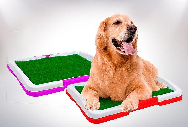 Baño de Entrenamiento para Mascotas