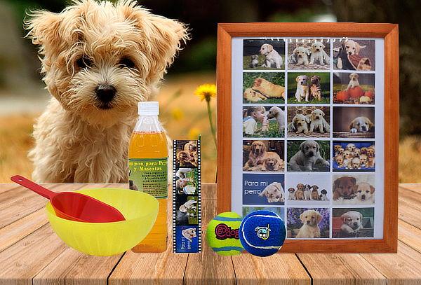 Pack para Perros: Collage de Fotos, Shampoo, Juguetes y Más