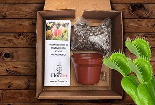 Kit Cultivo Planta Carnivora: Semillas + Sustrato y Más!