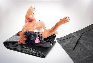 1, 5 o 10 Fundas Protectoras de Mascotas para Auto