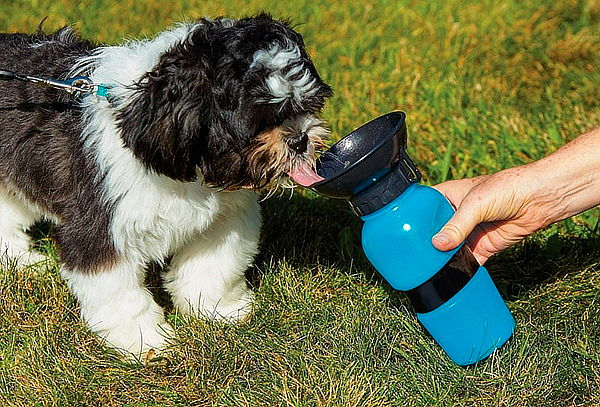 Pack 2 Botella de Agua para Mascotas de Soft Pet