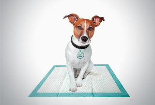 100 toallas de entrenamiento para mascota