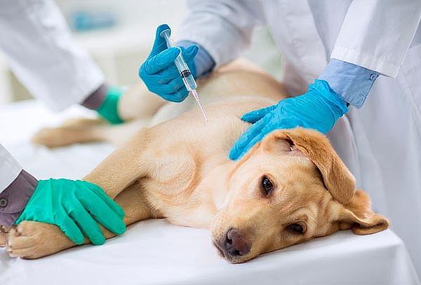 Vacunación para perros, Providencia