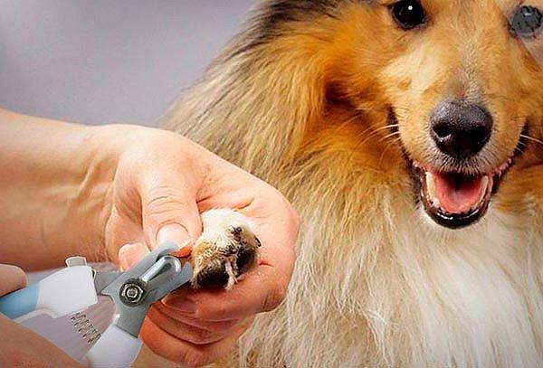 Consulta + corte de uñas + limpieza de oídos, Providencia