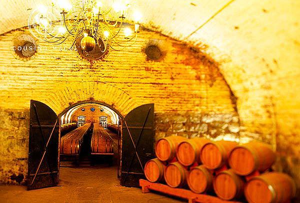 Wine Tour Viña Cousiño Macul, Peñalolén