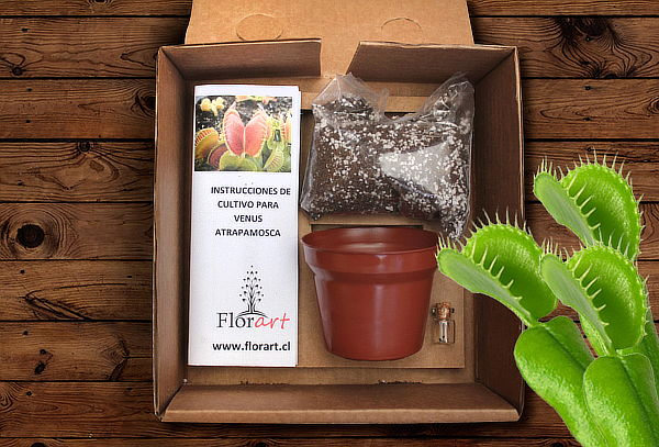 Outlet - Kit de Cultivo AutoHuerto  Planta Carnivora