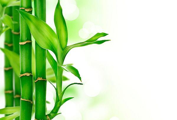 Pack 2 Almohadas de Bambú Viscoelásticas con Memoria