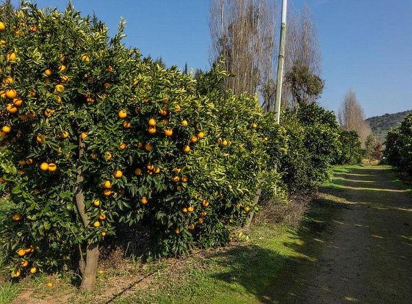 Los Naranjos de Mallarauco: Noche para 2 + Spa
