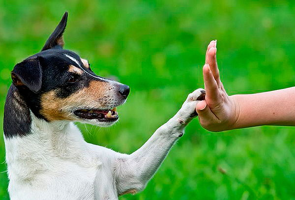 Curso Online de Entrenamiento Canino en Aula Global