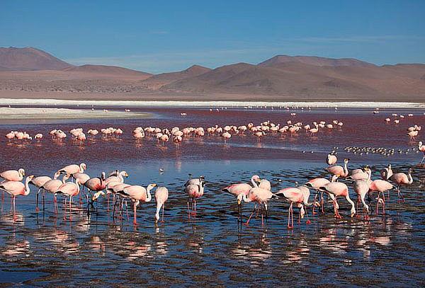 Iquique y San Pedro de Atacama con Aéreo, Hotel y Mas!