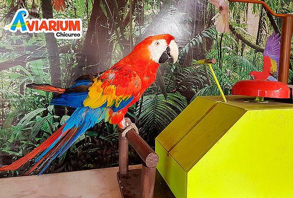 Entrada para niño o adulto a Aviarum Chicureo