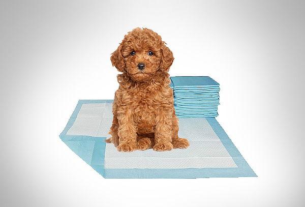 Pack de 100 Toallas de entrenamiento para tu mascota