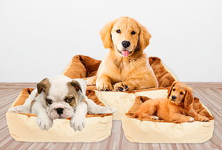 Cama + Cojín para Mascotas, 4 Tamaños a Elección