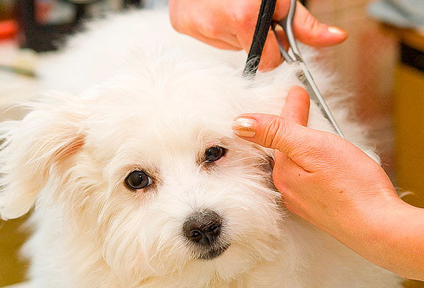 Baño Canino + Corte de Uñas y Pelo + Antiparasitario