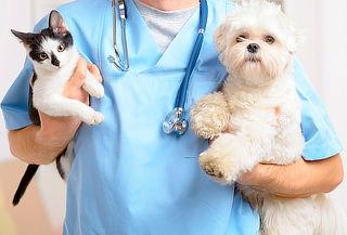 Corte de Uñas + Desparasitación Interna para Perros y Gatos