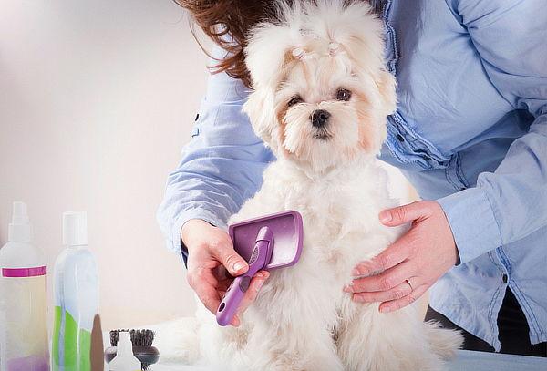Spa Canino + Corte Sanitario, Vitacura