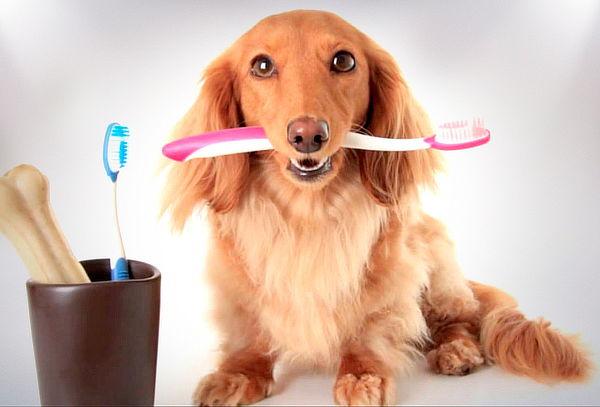 Limpieza Dental Para Perros y Gatos con Revisión y Regalo