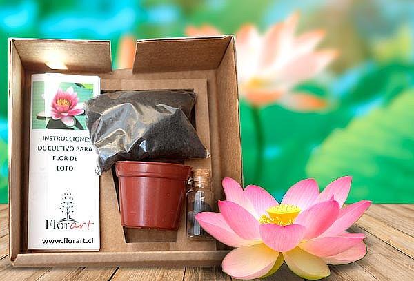 Kit de Cultivo Plantas Exóticas a elección