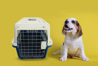 Caja Transportadora de animales:  Para Mascotas