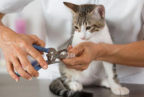 Corte de uñas y desparasitación interna, perros y gatos