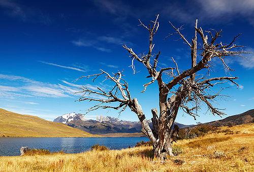 Verano 2017 en Patagonia: aéreo, hotel, traslados y más!
