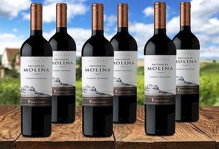 6 botellas vino Castillo Molina Gran Reserva Cabernet S.