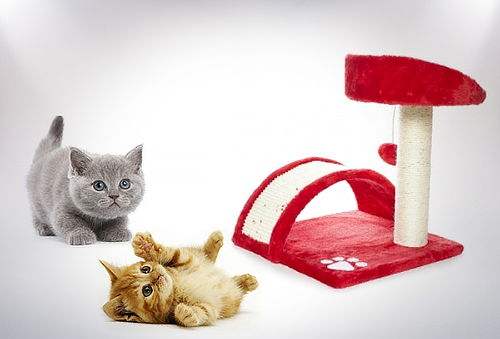 Rascador para Gato!!