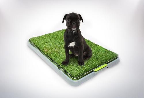 Baño XL para Mascotas