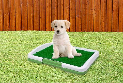 Baño para Mascotas S